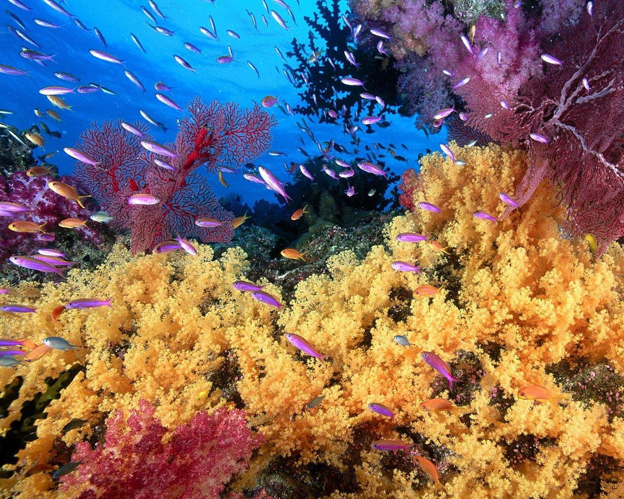 http://4.bp.blogspot.com/_1v9-uzlqkzY/S6_xi1iDdhI/AAAAAAAAQm0/sfKdex9OqTo/s1600/corales%2Bfondos-marinos-corales-1280.jpg