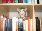 Bookish Kitty, Too