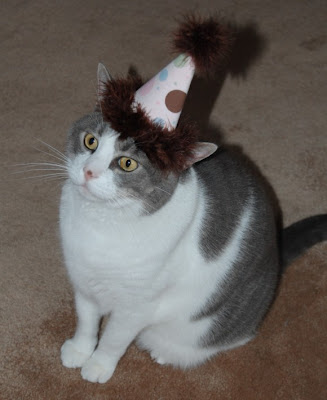 cat in the party hat