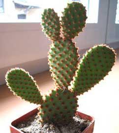 Solo cactus 24 12 06 31 12 06 for Tipos de cactus