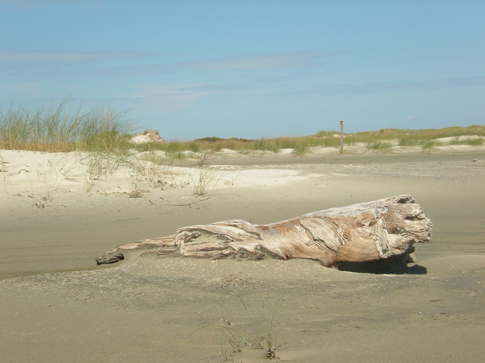 sandy beach, grass, driftwood