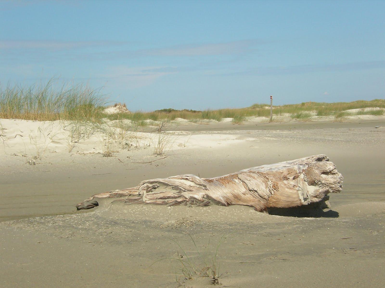 sandy beach, grass, driftwood