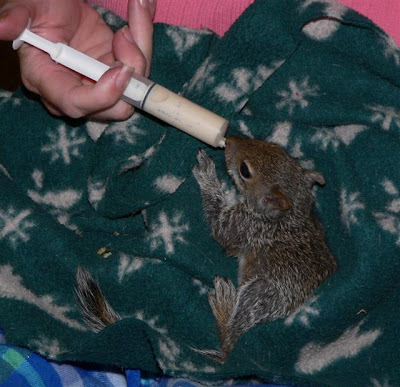 squirrel rehabilitation