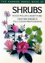 Shrubs