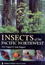 Northwest Native Insects