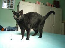 MI GATO/ MY CAT