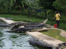 cRocS! - Langkawi Island