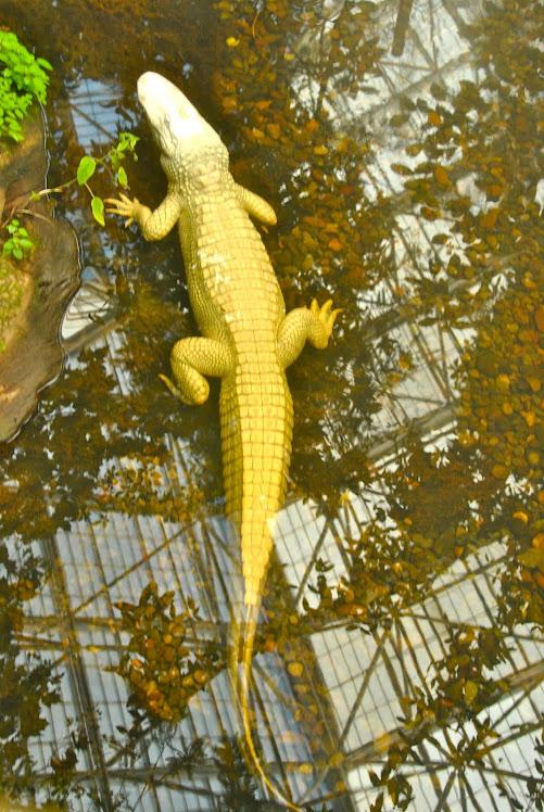 carolina lagoon animals