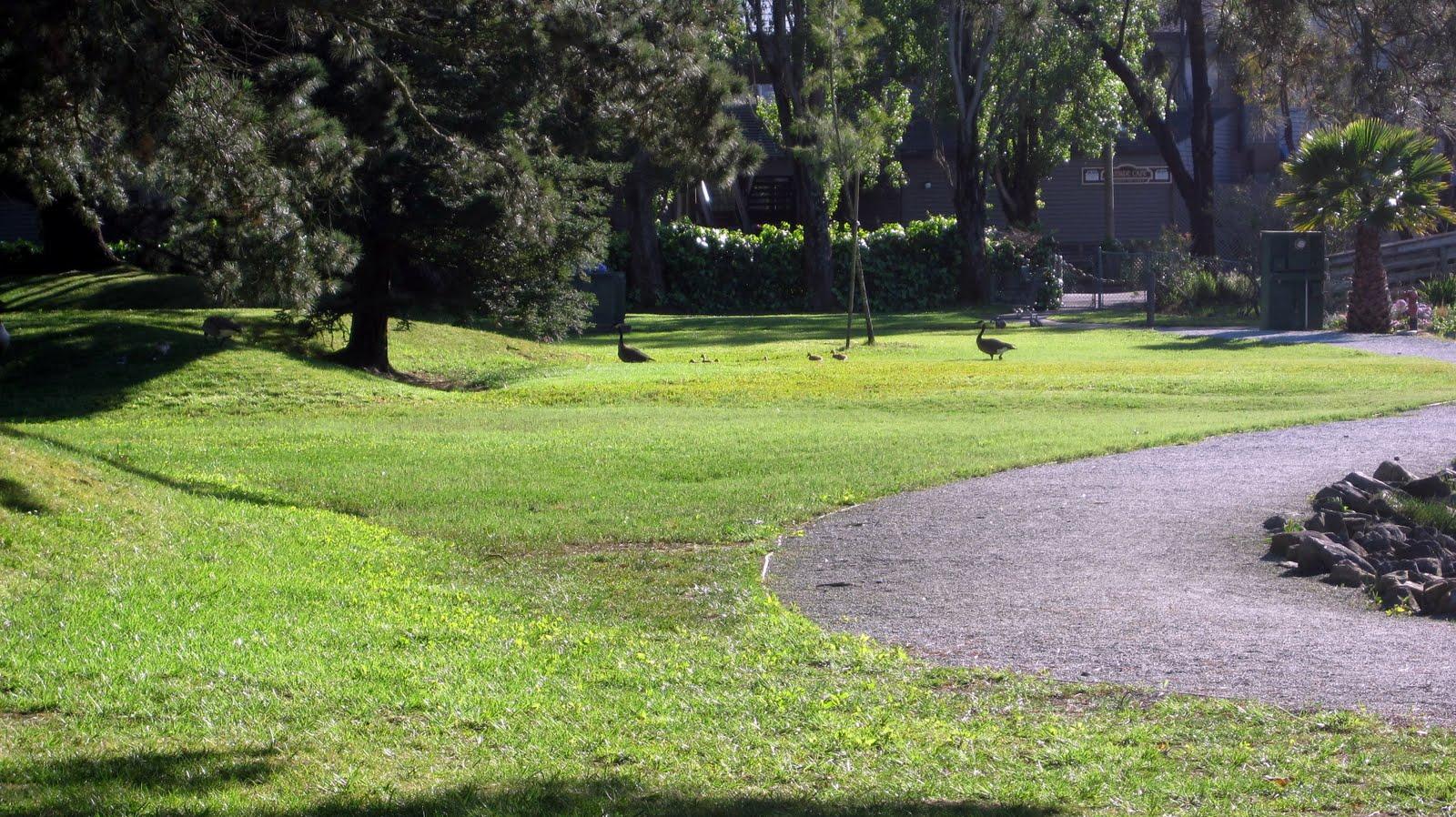 http://4.bp.blogspot.com/_25CTxGOAYf4/S98yJvooMII/AAAAAAAAA0Y/W3LEWGcmooM/s1600/geese.jpg