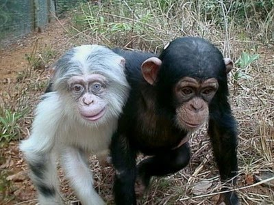 Cara, De, Mono Imágenes gratis en Pixabay - imagenes de animales monos