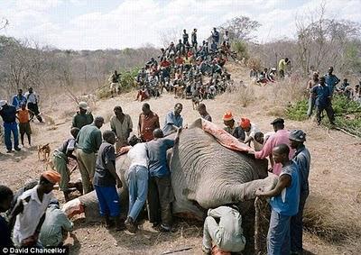 [Only+In+Zimbabwe+04.jpg]