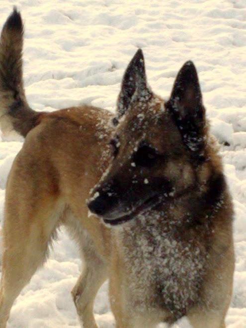 Ronny the snow dog