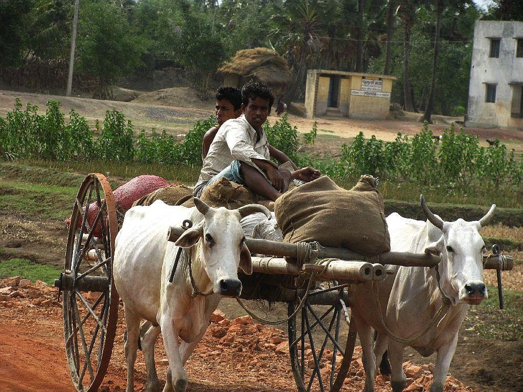 hindi essay of my village