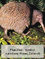 Nielotny Ptak Kiwi - symbol narodowy Nowej Zelandii
