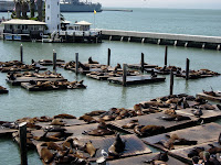 Sea Lions San Francisco California