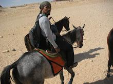 kuda padang pasir
