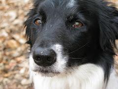 Jessica Rabid dog :0)