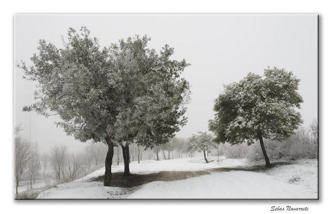 Parque nevado. 9 de enero 2009