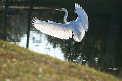 Visit My Bird Blog