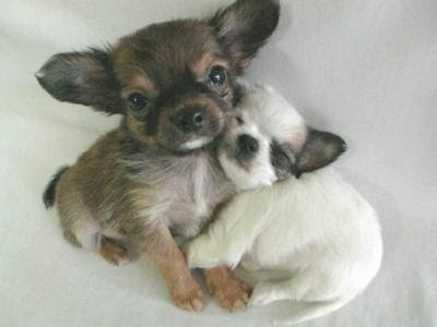 Your Awwww For Today - HUGS!