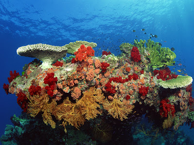 free desktop wallpaper Coral reefs pictures ,underwater wallpaper hi res,wide 1600x1200