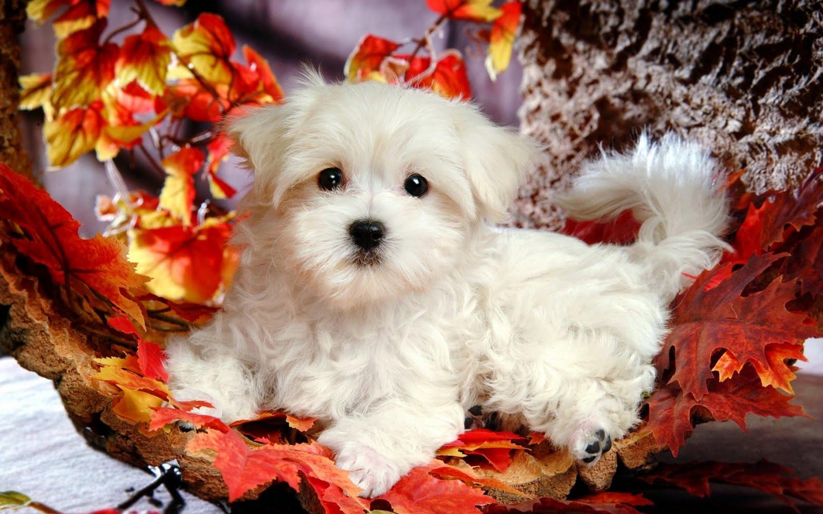 http://4.bp.blogspot.com/_2IU2Nt4rD1k/TC40TCLf2VI/AAAAAAAABy0/oz4mwlkTKkc/s1600/cute_dogie_on_1680x1050.jpg