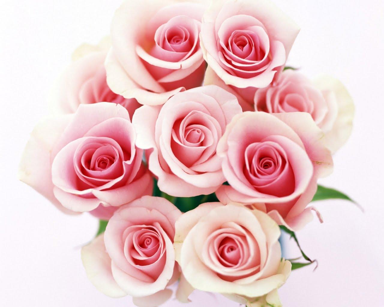 56. Gönülçelen -Inima furata - Heart Stealer - General Discussions - Comentarii - Pagina 4 Trandafiri_roze
