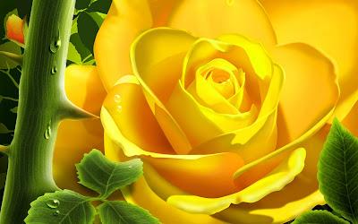 ... kuning bunga mawar kuning gambar bunga mawar original wallpaper size 1