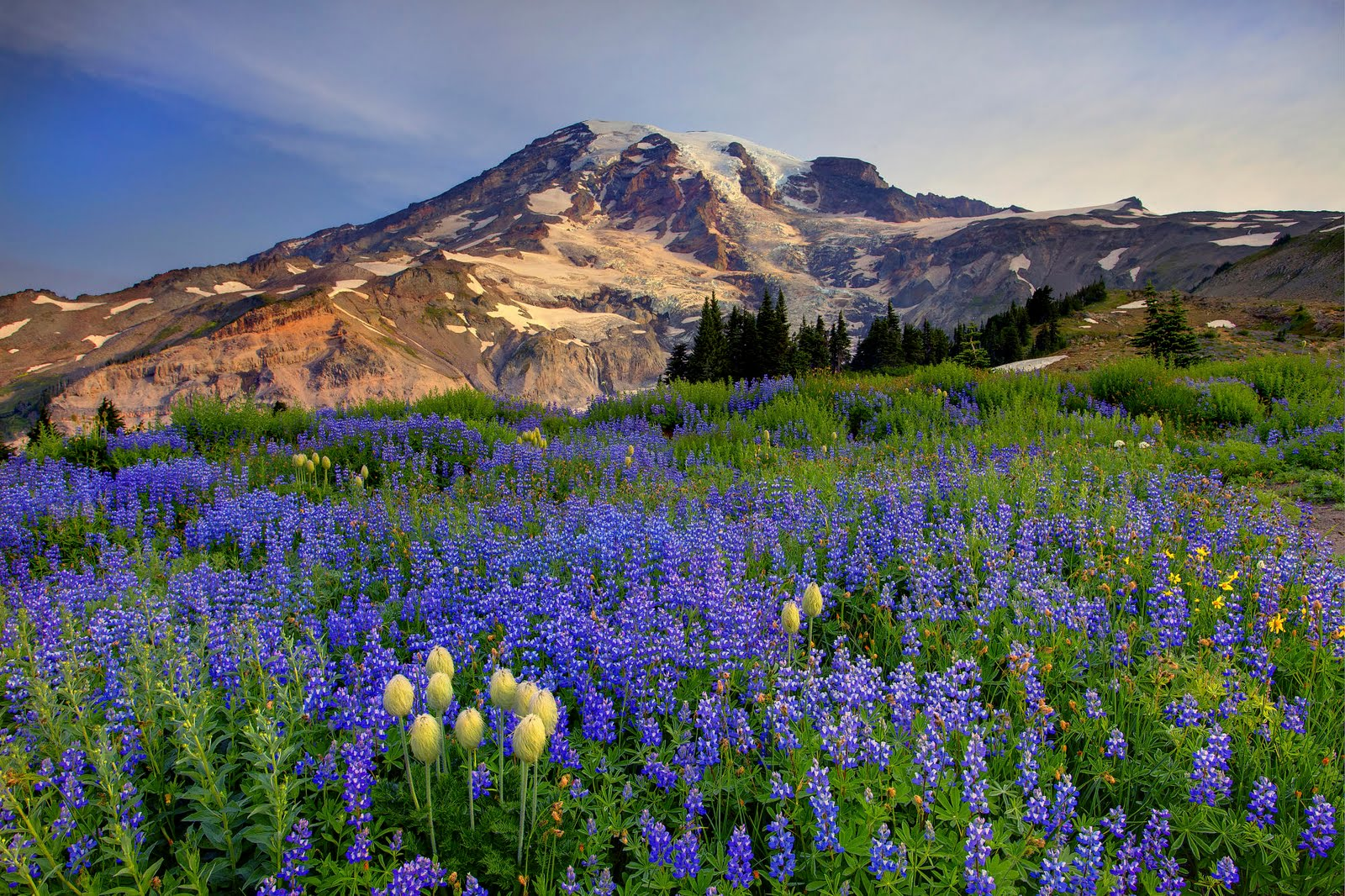 mount rainier According to our research of maryland and other state lists there were 6 registered sex offenders living in mount rainier, maryland as of july 21, 2018 the ratio of number of residents in mount rainier to the number of sex offenders is 1,410 to 1 the number of registered sex offenders compared to .
