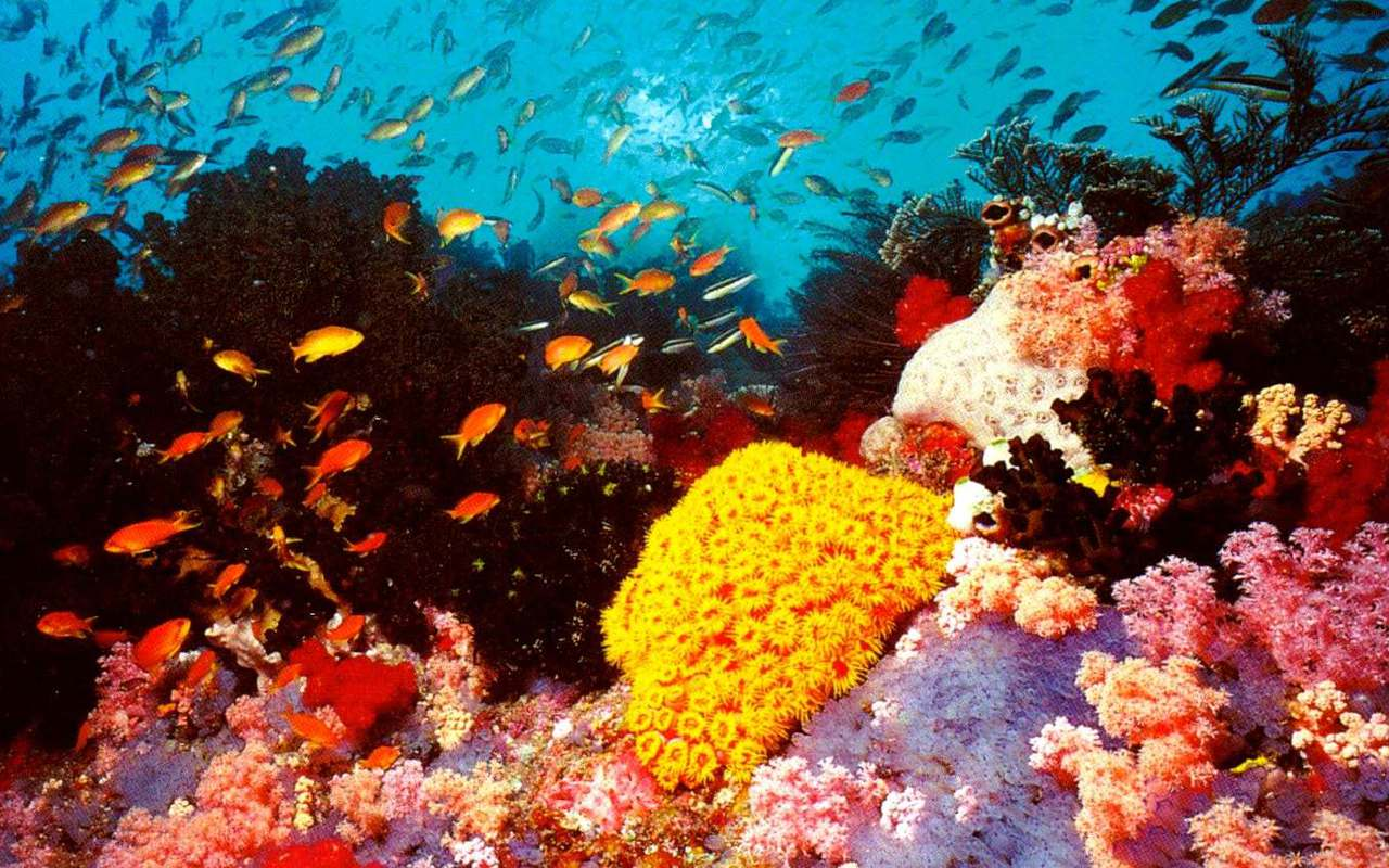 coral reef and australia Composed of over 2,900 individual reefs and 900 islands, the great barrier reef  is located in the coral sea, off the coast of queensland, australia known to be.