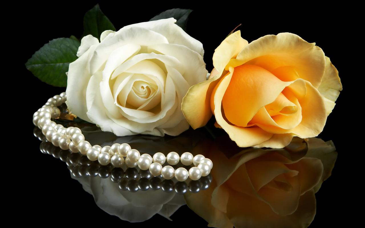 http://4.bp.blogspot.com/_2IU2Nt4rD1k/TUdEEMK2dnI/AAAAAAAAC0Y/68-zkt7lwgU/s1600/trandafiri_pentru_desktop.jpg