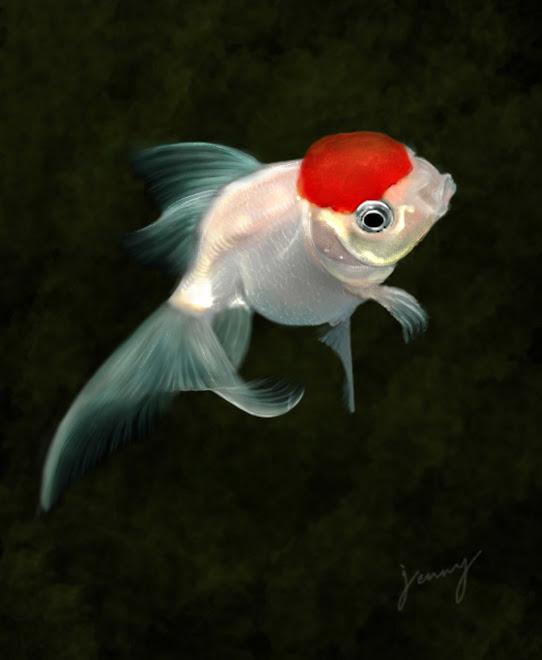 A fish called oranda