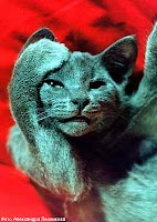 умствующие коты))