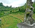 bali, bukit jambul, clove trees, karangasem regency, panorama, sea view, terrace field,