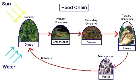 food web. food web and food chain.