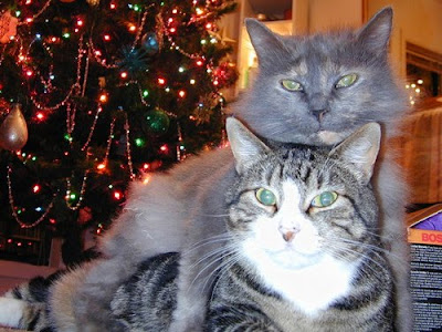 Christmas Cats Picture