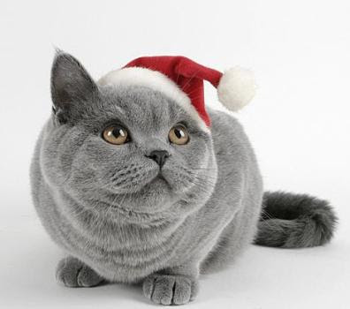christmas cellular phone wallpaper. christmas cat 320 x 240 mobile phone wallpaper download - eseth