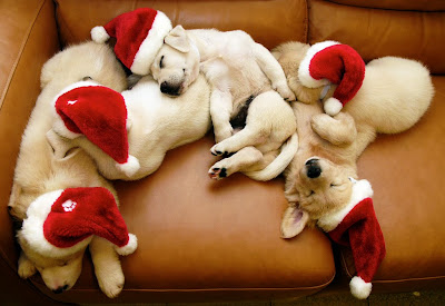 Christmas Cute Puppies