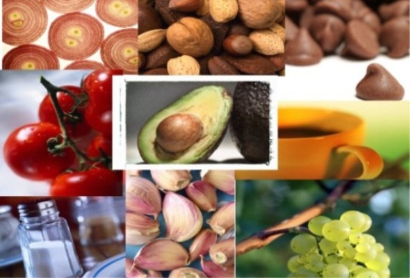 Theophylline Foods To Avoid