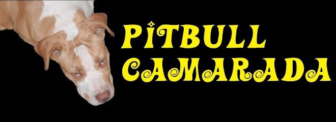 Pit Bull Camarada
