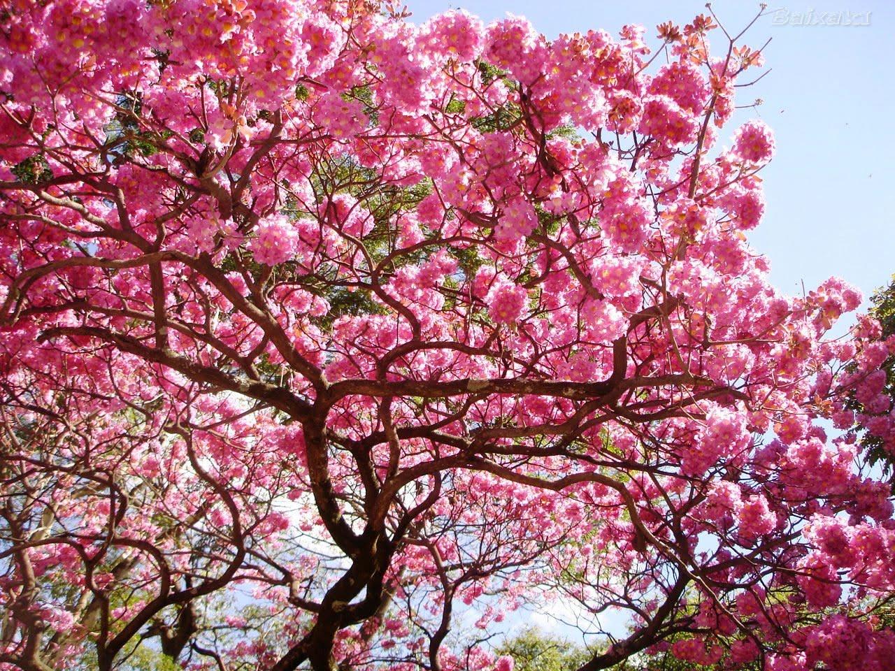 CIÊNCIA DO SER A Sabedoria da Árvore Frutífera