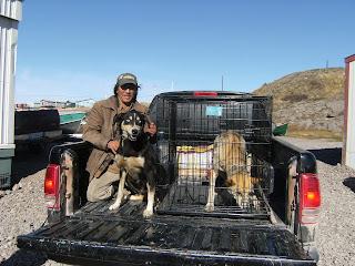 Canadian Animal Assistance Team: Baker Lake, Nunavut - DAY 5