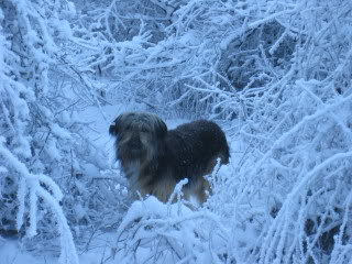 winter MOU