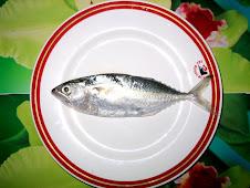 Sea Fish of Bangladesh