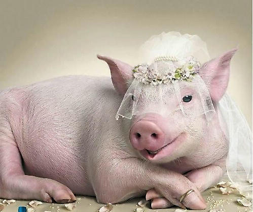 village of fun bizarre animal weddings