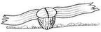 Welwitschia Mirabilis Estilizada