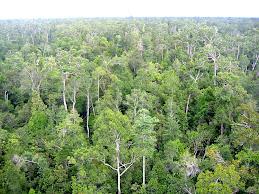 Sayangi Hutan Tropis Kita