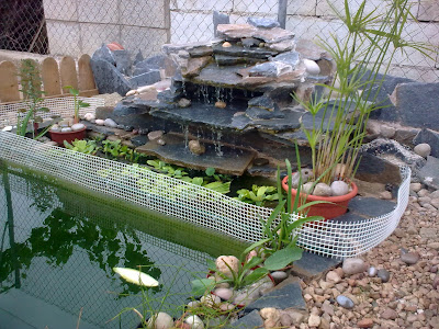 Mis tortugas acu ticas el estanque for Estanque de tortugas