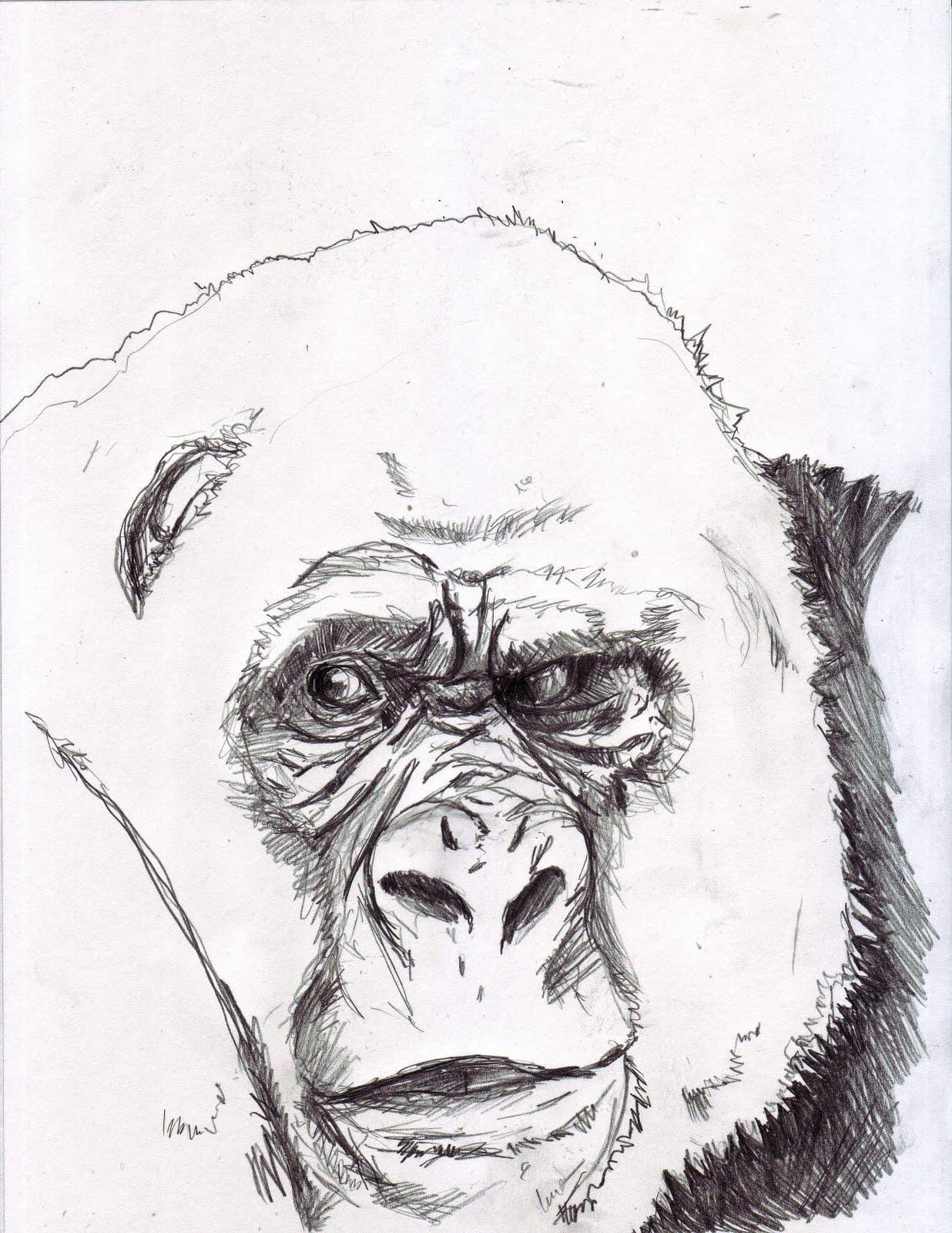 [Gorilla]