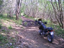 Drusilla dei boschi